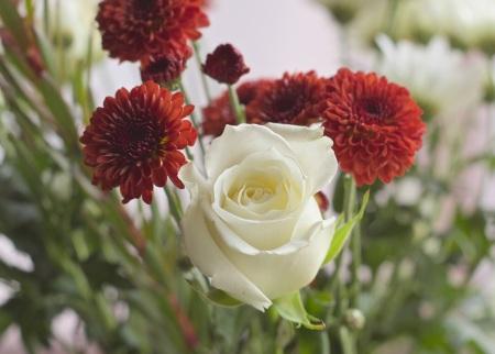 flowers-petals-gift-flower